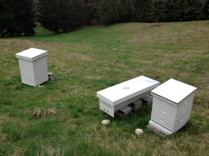 Bee Hive Comparison: Perone, Kenyan, Langstroth