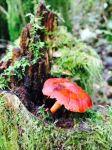 Mushrooms abound.