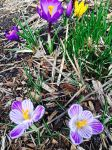 Love the colors of early spring