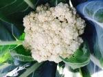 Another round of cauliflower