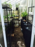Remodeling the greenhouse, 3