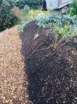 Hugel before fall/winter planting