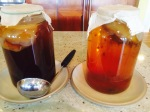 Kombucha: sugar-fed on the left; honey-fed on the right