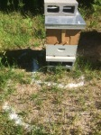 Helping the bees battle the ants via DE moats