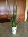 Endless asparagus