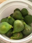 Figs: in the harvest bucket